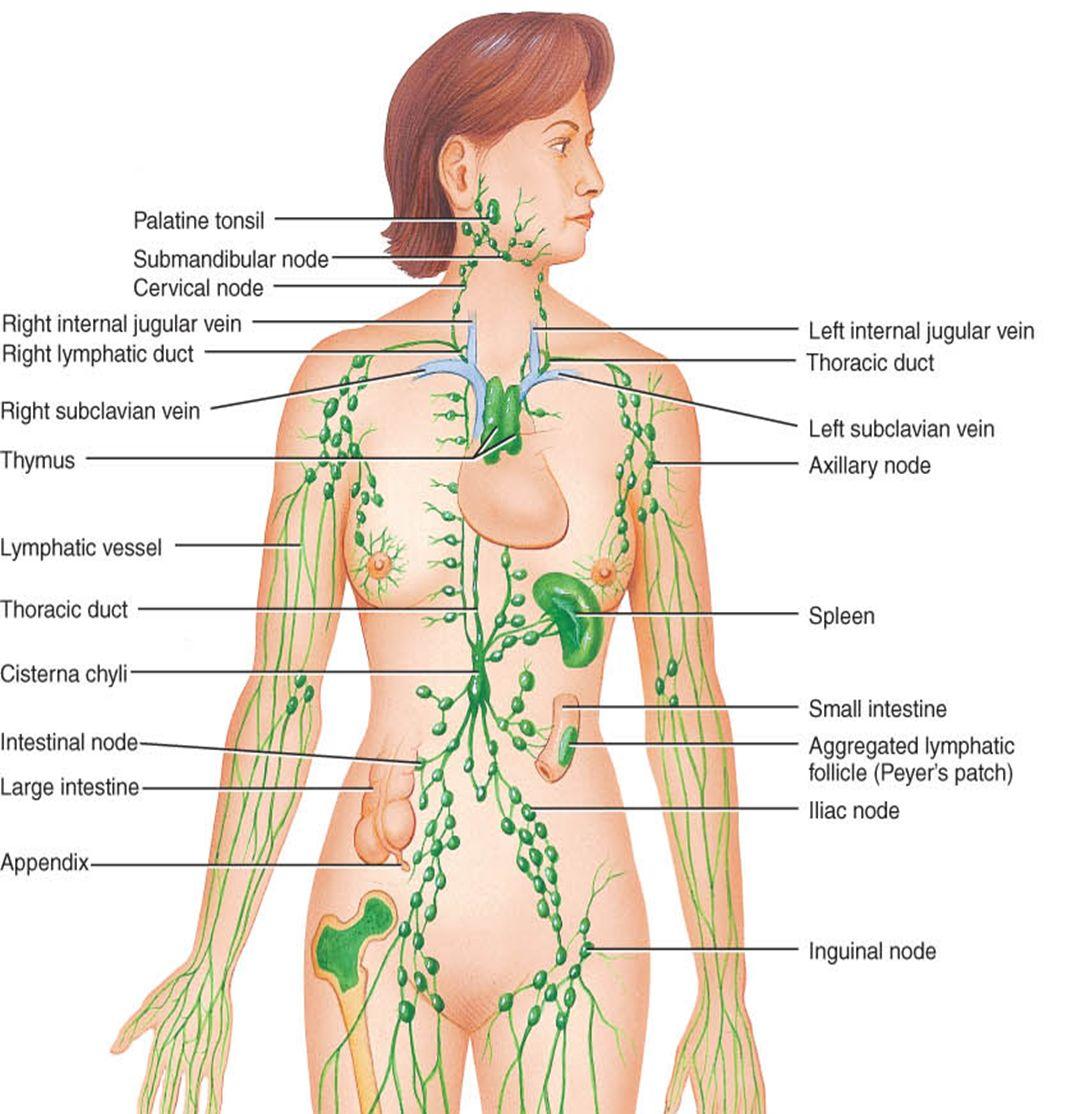 Lumfisolmede paistes ja kaalulangus