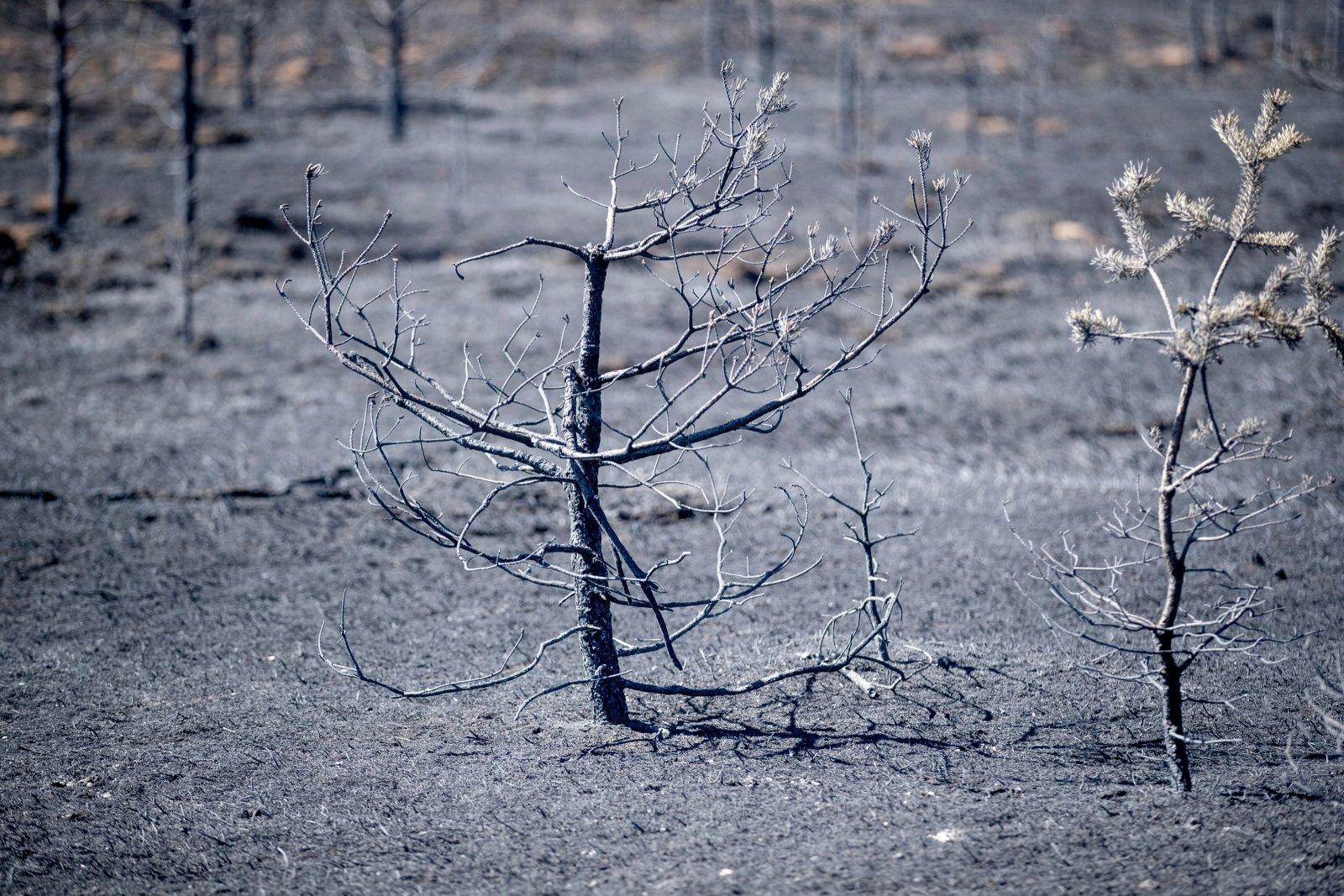Tulekahju pomm rasva poletid